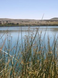 El amor, el agua y la Glándula pineal